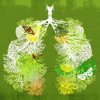Branches of trees forming healthy lungs