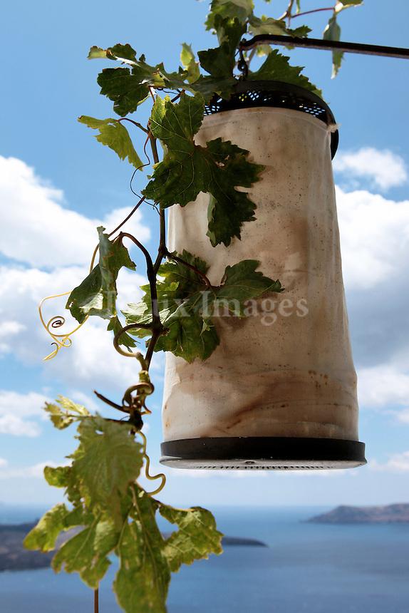 close up of vintage hanging lantern