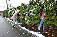 "Marion Catto and C. H. Lindberg peek through the bushes of their driveway to check on their neighbor's dog which is continuously tethered no matter what the weather conditions are in Enumclaw, Wash. on December 13, 2008. Says C. H. when ""he's unhappy or he's wet or whatever it is, he starts to bark and whine and he moans and groans and she (Marion) cries and I cry.  We're so upset.  He can't sleep."" (Karen Ducey/Seattle Post-Intelligencer)"