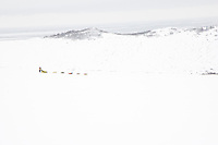 Sigrid Ekran runs on the trail in the Blueberry hills with the Bering Sea in the background between Unalakleet and Shaktoolik during Iditarod 2008
