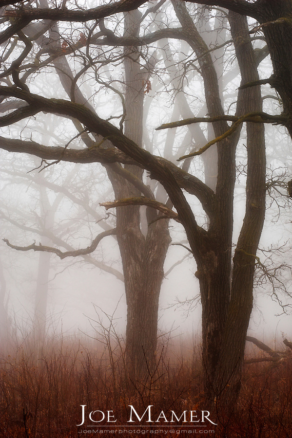 Fog shrouded oak trees at Louisville Swamp, part of the Minnesota Valley National Wildlife Refuge. The Minnesota Valley National Wildlife Refuge is located within the urban and suburban areas of Minneapolis and St. Paul. It is a green belt of large marsh areas totaling approximately 14,000 acres, spanning 99 miles of the Minnesota River. This is one of only four American national wildlife refuges in an urban area, and the largest.