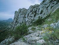 Mountains and wildflowers, Denja, Alicante, Costa Blanca, Spain, Europe
