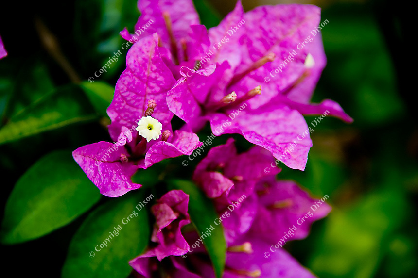 A flower from Puerto Ricos El Yunque rain forest on Feb. 7, 2012
