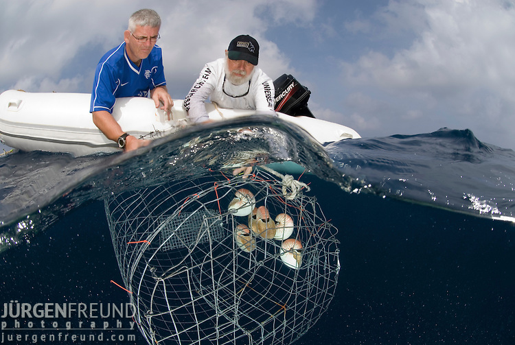 Nautilus brought up from 300 metres for nautilus research with Dr. Billy Sinclair and John Rumney looking at the cage with the 6 caught nautilus.