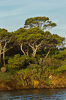 Europe/Provence-Alpes-Côte d'Azur/83/Var/Iles d'Hyères/Ile de Porquerolles: Le littoral et ses Pins d'Alep à  la Pointe de Maubousquet