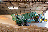 Loading winter wheat into store - Lincolnshire, August