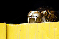 A statue of the golden lion seen behind the door of the Samba school workshop in Rio de Janeiro, Brazil, 19 February 2004.