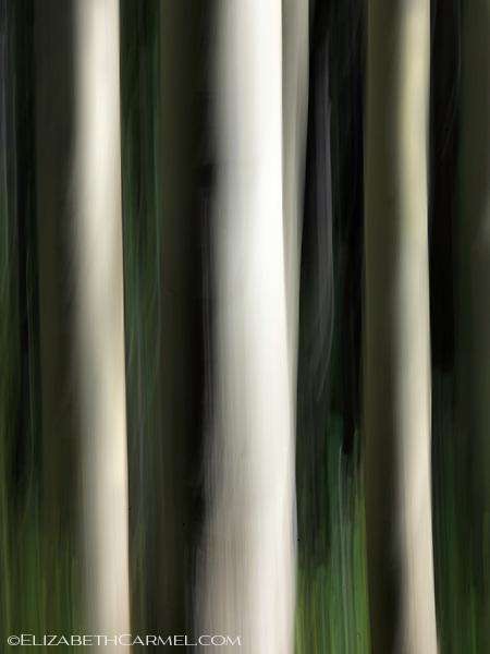 White Aspens
