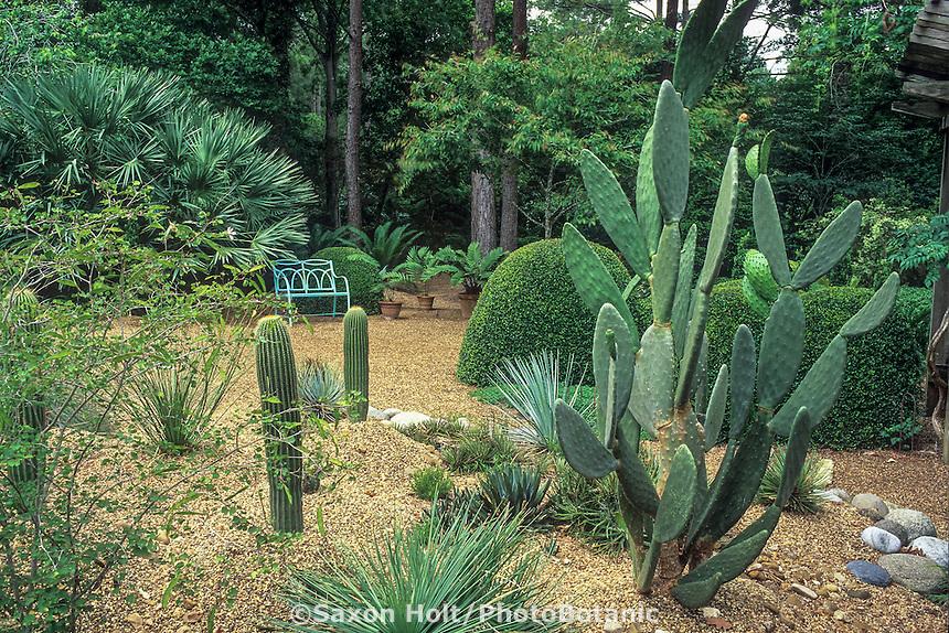 Cactus, hardy succulent garden with gravel path in Texas Peckerwood Garden