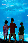 Young kids watch Killer Whale (orcinus orca) swimming in pool at Sea World, near San Diego, California