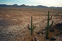 Centuries old pathway across the less hospitable terrian in Arizona and California, this view shows the Cabeza Prieta in Southern Arizona near the US-Mexico Border...