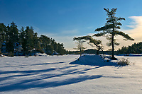 Pine trees on island of frozen McGregor Bay (Georgian Bay) <br />