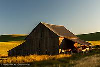 Barn in huge wheat field at sunrise, Palouse region of eastern Washington.