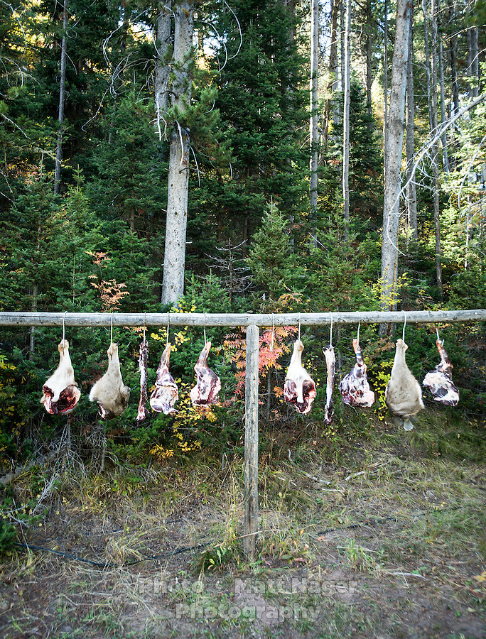 Meat to cures after a mule deer hunt at Trefren Outfitters on Greyback Ridge in the Hoeback Drainage of Wyoming Region H, outside of Alpine, Wyoming, September 23, 2015. <br /> <br /> Photo by Matt Nager