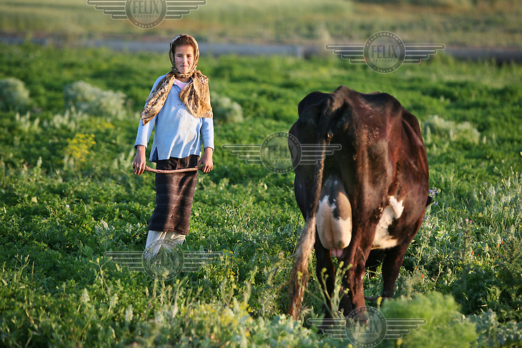 A shepherd girl looks after her cow near the village of Tlaha.