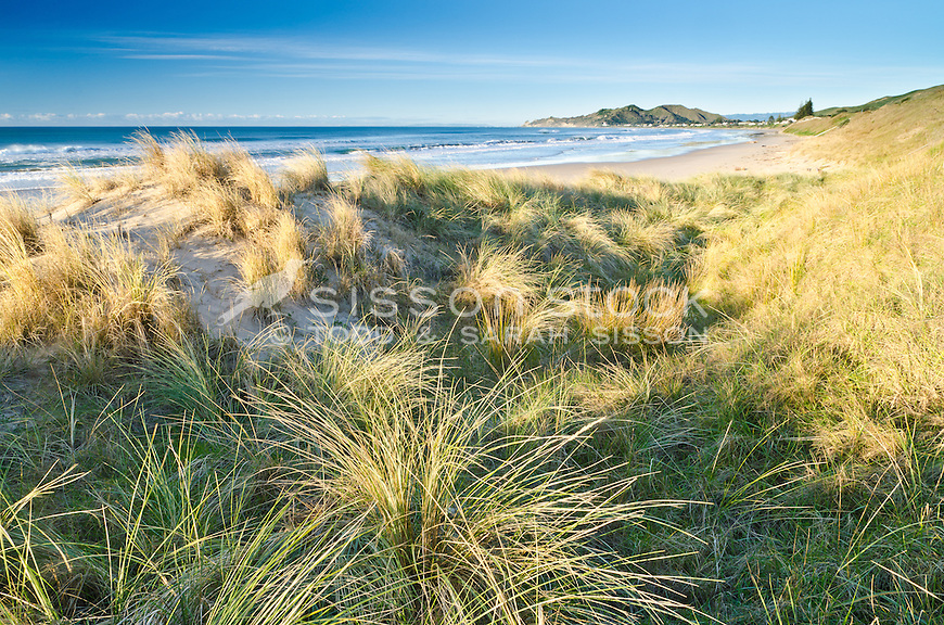 Morning light on beach grasses on sand dunes at Wainui Beach