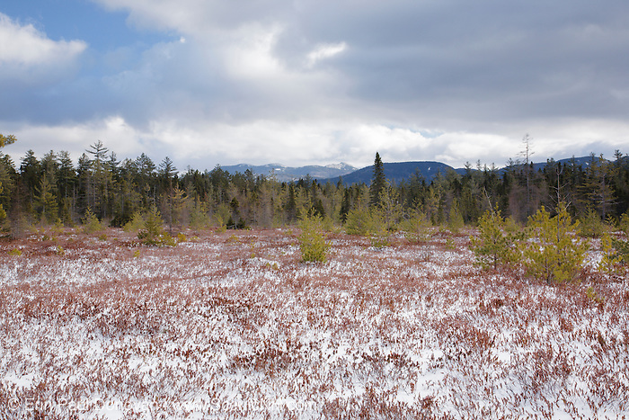 """Peatland community near Church Pond in the White Mountains, New Hampshire USA. <br /> This area is referred to as """"the bog"""" and was part of the Swift River Railroad era, which was an logging railroad in operation from 1906 - 1916. Mount Chocorua is way off in the distance"""