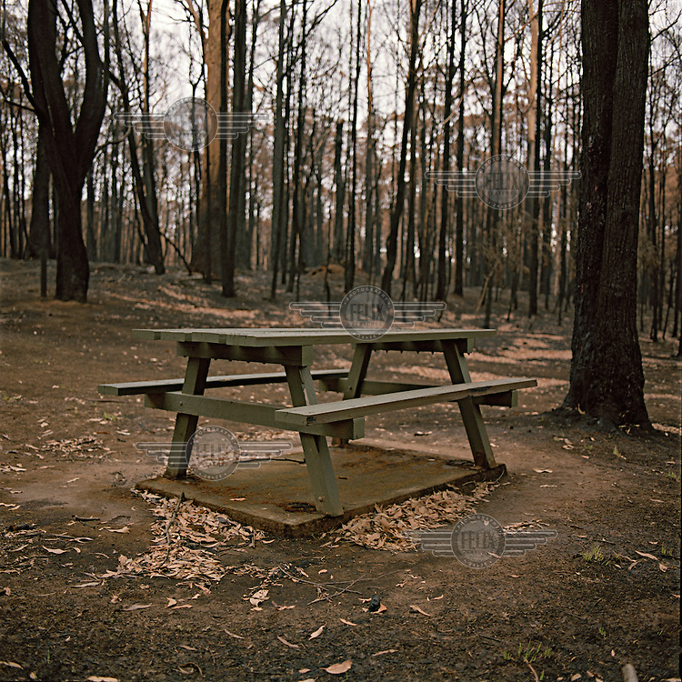 A wooden picnic table in a cleared State Forest Camp Ground was untouched by fires but surrounded by burnt forest. This demonstrates that 'clearing land' does promote a safer environment for those living in the bush. The Black Saturday bushfires, which began on 7th February 2009, were the deadliest in Australia's history. The fires killed 173 people, displacing 7,500 and destroying 2,000 homes over an area of 450,000 hectares.