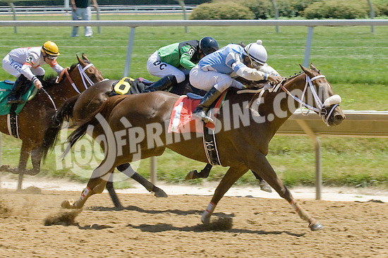 One Hot Toddy winning at Delaware Park on 6/16/12