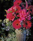 Carl, FLOWERS, nature, photos, SWLA, SWLA883,#F# Blumen, Natur, flores, naturaleza