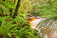 Oparara River in Oparara Valley - Kahurangi National Park, West Coast, New Zealand