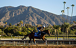 OCT 26: Breeders' Cup Juvenile  entrant Shoplifted, trained by Steven M. Asmussen, at Santa Anita Park in Arcadia, California on Oct 26, 2019. Evers/Eclipse Sportswire/Breeders' Cup