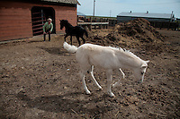 Karen Sussman plays with Angel and Buttercup, two orphaned foals she bottle-fed in her house.  She is president of the International Society for the Protection of Mustangs and Burros--the organization that Wild Horse Annie started when lobbying congress in the '70s to save mustangs and burros from inhumane treatment.