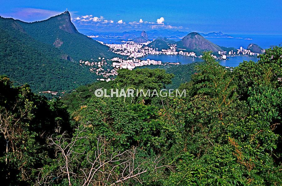 Parque Nacional da Tijuca. Rio de Janeiro. Foto de Juca Martins.