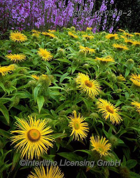 Tom Mackie, FLOWERS, BLUMEN, FLORES, photos+++++,GBTM010348-2,#f#, EVERYDAY