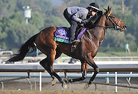 Sweet Shirley Mae, trained by Wesley Ward, exercises in preparation for the upcoming Breeders Cup at Santa Anita Park on October 31, 2012.