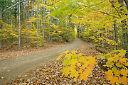 Tower Road in Pawtuckaway State Park in Nottingham, New Hampshire USA during the autumn months.