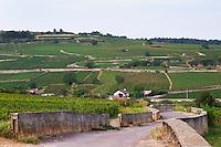 Vineyard. Rugiens sector. Pommard, Cote de Beaune, d'Or, Burgundy, France