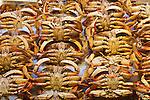 Dungeness crab on display, Pike Street Market, Seattle, Washington.