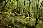 Backpacker hiking through deciduous forest, Pescadero Creek County Park, California