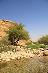 Einot Petzael in Samaria