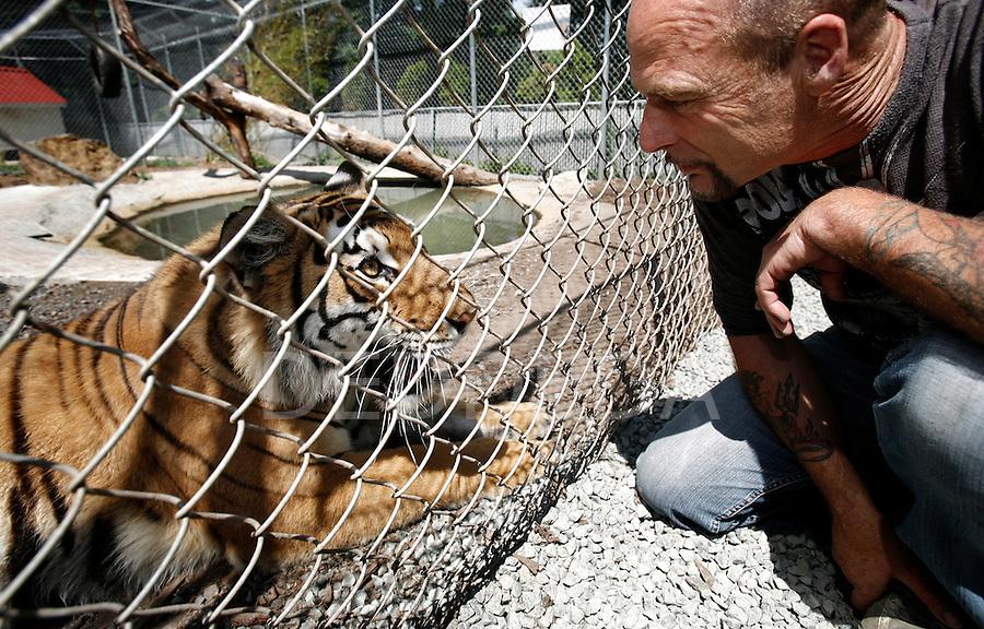 Dave Bennett says hello to Suzie, his three-year-old Siberian Bengal cross tiger, in her fenced enclosure at Bennett's home in the District of the Highlands municipality near Victoria, British Columbia. Bennett is ignoring a court-imposed deadline of Monday night at midnight (tonight) to find Suzie a new home. Photo assignment for the Globe and Mail national newspaper in Canada.