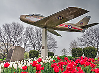 Golden Hawks memorial jet, Germain Park, and 150th anniversary tulips