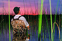 00416-031.13 Fishing: Angler wearing waders is fishing in bulrushes against a pink after glow.  Bass, largemouth, wade, shallow