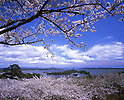 April 01, 2003: File photo showing Matsushima, Miyagi Prefecture, Japan taken in April 01, 2003. Matsushima was renowned for its natural beauty but  devasted by the massive magnitude 9.0 earthquake and subsequent tsunami that struck the eastern coast of Japan on Fraiday 11th March, 2011....
