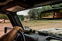 Hunting guide Buck Watson drives towards White Buffalo at the Ox Ranch, on the 15th of August, in Uvalde, Texas, USA. <br /> Photo Daniel Berehulak for the New York Times