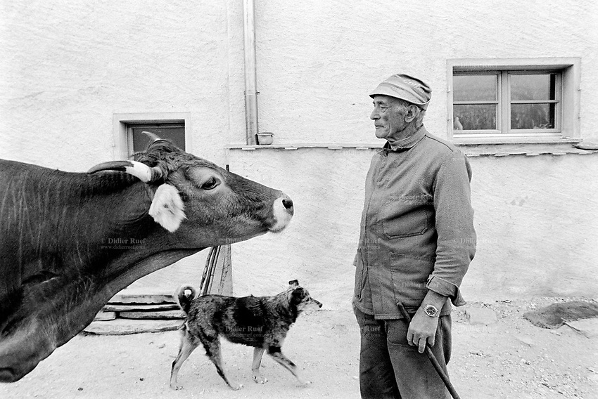 Switzerland. Canton Graubunden. Viano. Poschiavo valley. Luigi Merlo with his dog and a cow near his small farm.    Swiss alpine farmers. Alps mountains peasants.  © 1995 Didier Ruef
