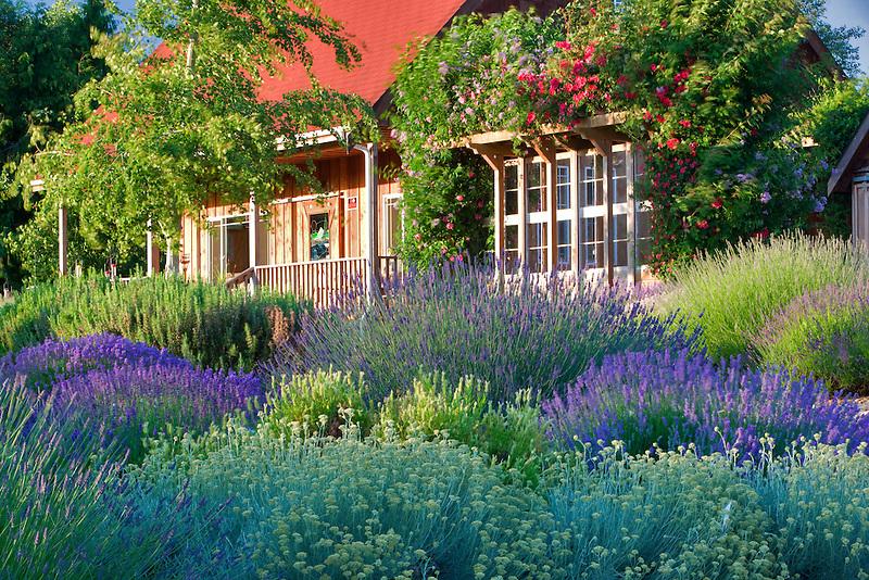 Lavendar and gift shop. Purple Haze Lavender Farm. Washington