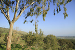 Israel, Menahemia forest overlooking the Jordan valley