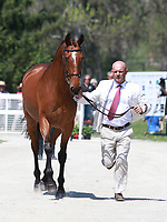 LEXINGTON, KY - April 26, 2017. #4 Clip Clop and Joe Meyer from New Zealand at the Rolex Three Day Event First Horse Inspection at the Kentucky Horse Park.  Lexington, Kentucky. (Photo by Candice Chavez/Eclipse Sportswire/Getty Images)