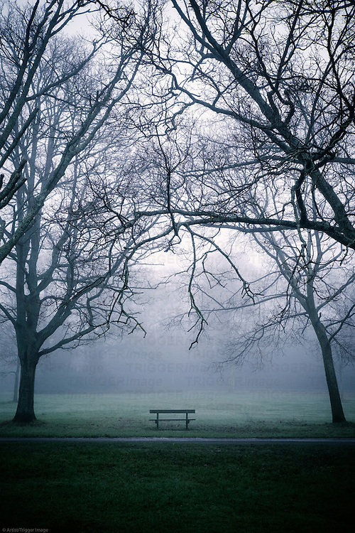 Trees in a misty park with deserted bench