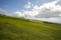 Green pasture on the side of Kohala Road on the Big Island of Hawaii