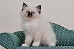 kitten 216
