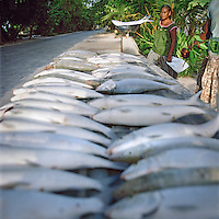 Fish are sold fresh daily at roadside stalls.