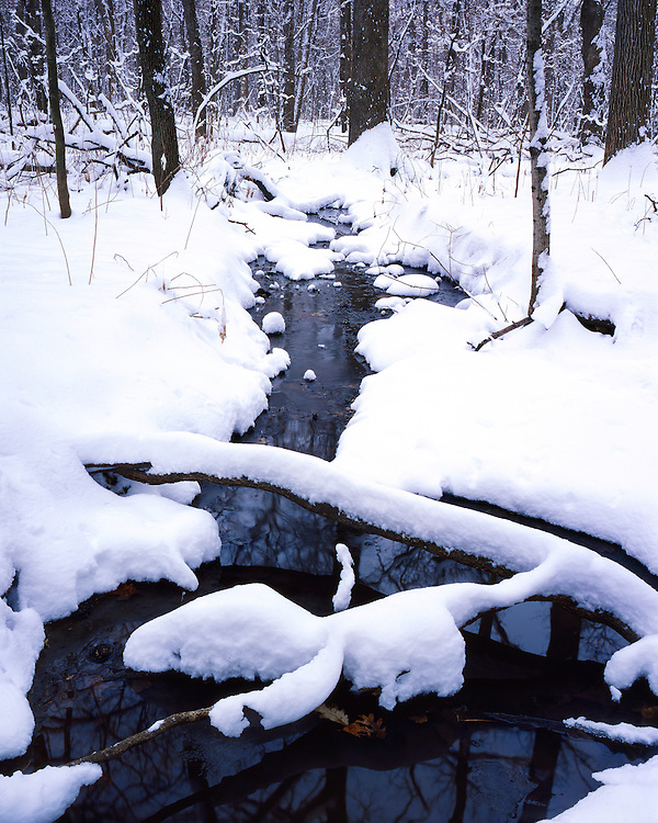 Winter scene along a stream in Funks Grove; McLean County, IL