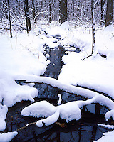 Winter scene along a stream in Funks Grove; McLean County, IL